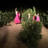 danza tra le vigne di Contessa Entellina