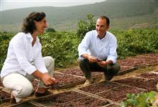 Josè e Antonio Rallo, Donnafugata